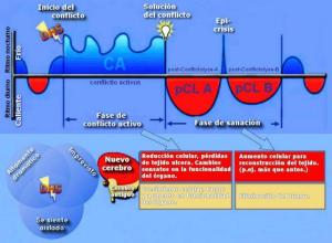 Fases de una Enfermedad segun la Nueva Medicina Germánica